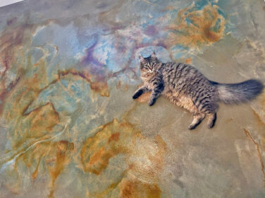 Cat on acid stained concrete floors