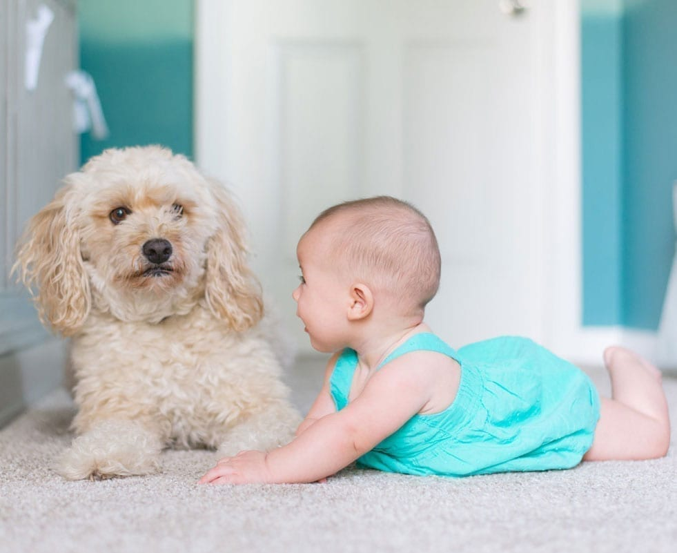A baby and a dog roll around on a carpeted floor.