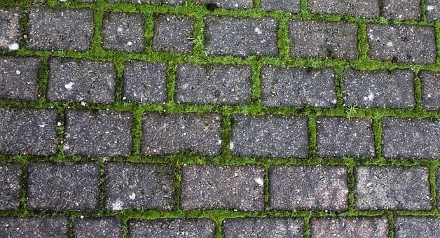 Concrete Grid Patio Pavers reveal moss grout.