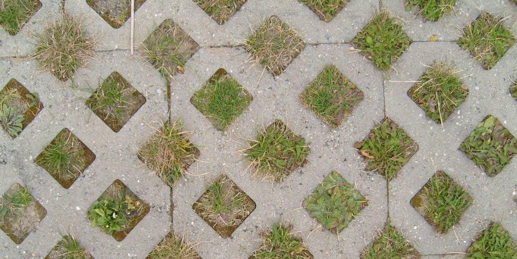 Grass grows between grass block or grid concrete pavers in a backyard.